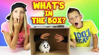 Video What's in the Box Challenge!!!!! MP3, 3GP, MP4, WEBM, AVI, FLV Juni 2019