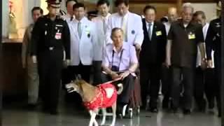 เรื่องหลังบ้านท่านเจ้าของคอกม้า 05   ลุงสมชาย เสาหลักที่เริ่มพิการ