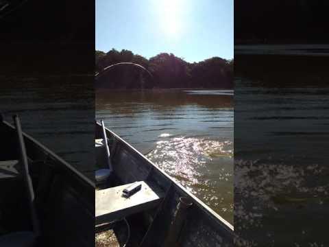 Pesca Rio Paraguai olha o tamanho do bitelo