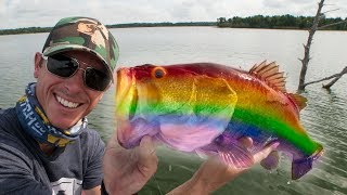 Bass fish are becoming transgender in major rivers due to chemicalsSUBSCRIBE - https://www.youtube.com/lakeforkuyWATCH MORE FISHING - https://www.youtube.com/playlist?list=PLF43D57E0A9B443B3GET OFFICIAL FISHING FREAK GEAR and T RIG SHIRTS HEREhttp://bit.ly/LFGMERCHLISTEN TO THE PODCASThttp://bit.ly/HOOK-ARROWINSTAGRAM https://www.instagram.com/lakeforkguySNAPCHAT - LakeForkGuyFACEBOOK https://www.facebook.com/lakeforkguyMail me stuff that won't kill me : )Justin RackleyPO Box 280Wellborn, TX 77881ABOUT LFGJustin Rackley, known as Lakeforkguy in the fishing world, creates fishing and outdoor videos on youtube and other social platforms.  LFG provides fishing tips and techniques for mostly largemouth bass fisheries but also travels to other freshwater and saltwater fishing spots to explore new fish species and fishing techniques to show as many fishing places as possible and help you catch more fish.  Lakeforkguy likes to hang out on any fishing vessel or go bank fishing with his other YouTube Fishing friends and vlog with his Wife Stephanie and french bulldog Winston.ARTICLE LINKSThe Guardianhttps://www.theguardian.com/environment/2010/apr/21/toxic-stew-chemicals-fish-eggsTelegraphhttp://www.telegraph.co.uk/news/2017/07/02/fish-becoming-transgender-contraceptive-pill-chemicals-flushed/USGShttps://www.usgs.gov/news/intersex-fish-now-three-pennsylvania-river-basins---------------------------------------------------GEAR----------------------------------------------------CAMERASDSLR Camera (Panasonic GH5) - http://amzn.to/2a6frQEStatic Shot (Gopro Hero 4 Black) - http://amzn.to/2aiE4wQMetabones Speedbooster 4/3 EF Mount - http://amzn.to/2aoWey0CASESWaterproof Travel Case For My DSLR and Lenseshttp://amzn.to/2kLIOjiMetal Gopro Case with Filtershttp://bit.ly/GoProMetalCaseCheap GoPro Travel Casehttp://amzn.to/2kk30ugLENSESCanon 24-105mm L Lens - http://amzn.to/2a6fNqxRokinon 14mm WIDE - http://amzn.to/2aJRmkSAUDIOSony UWPD11/42 Lavalier Microphone - http://amzn.to/2afp1jHGopro Chesty Lav Mic (Cheap) - http://amzn.to/2azAMo1DSLR Shot Gun Mic - http://amzn.to/2anoJh9
