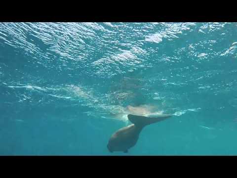 Dugong at RSDS Marsa Shagra