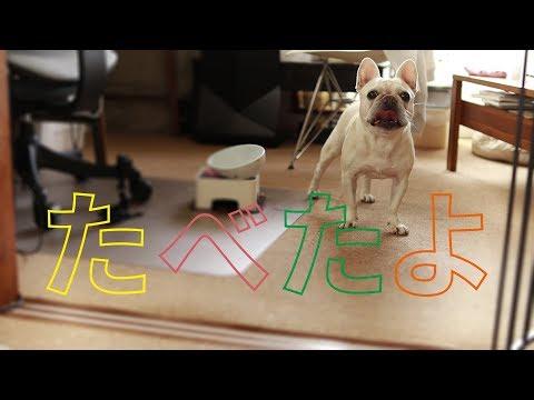 ごはんを食べた報告をする犬の可愛らしさよ