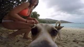 Saint John U.S. Virgin Islands  City pictures : Beautiful St John, Virgin Islands 2016 Trip video