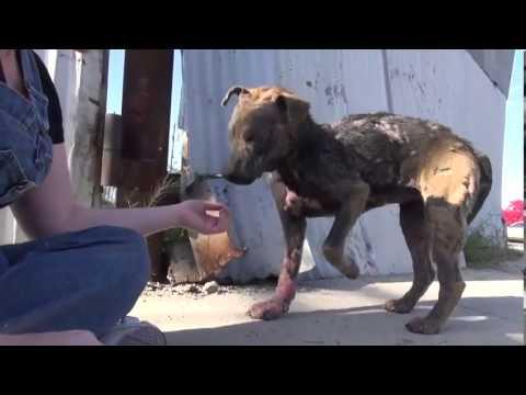 Chien dans un état lamentable sauvé ,une fois de plus, par » Hope for Paws» .