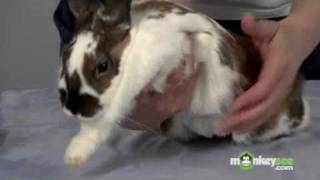 Rabbit Care - How to Handle Your Rabbit