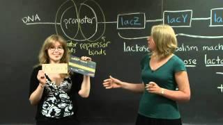 Lac Operon | MIT 7.01SC Fundamentals Of Biology