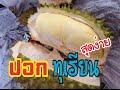 Download Lagu วิธีปอกทุเรียน how to peel a durian Mp3 Free