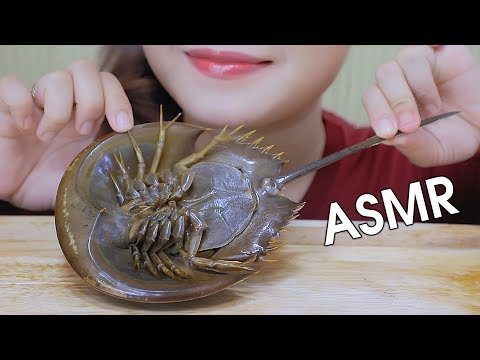 ASMR EATING HORSESHOE CRAB (EXOTIC FOOD), SOFT CRUNCHY EATING SOUNDS 먹방 | LINH-ASMR