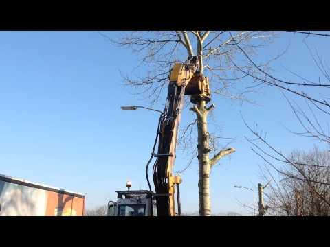 Bomen vellen 2
