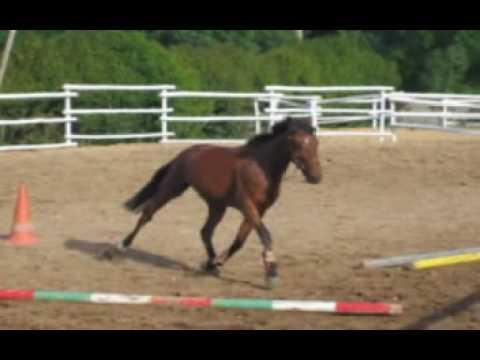 Le Bonheur ! Bel hommage au cheval !