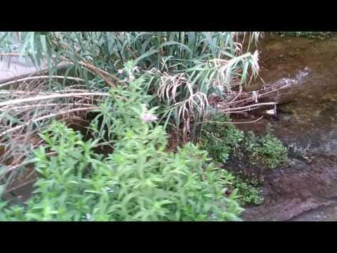 Pescara, scarichi nauseabondi nel Fosso Vallelunga: interviene la Forestale VIDEO-FOTO