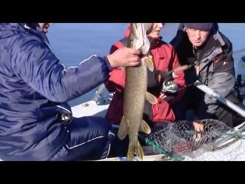 ловля судака на припяти видео