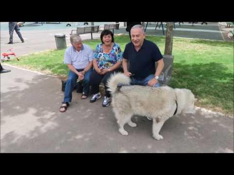Le retour de Kaiya, le chien de Benyamin Netanyahou