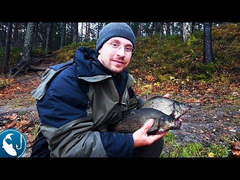 видео ловля леща осенью на фидер видео