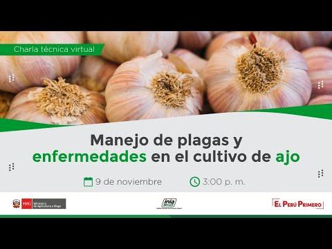 Manejo de plagas y enfermedades en el cultivo de ajo