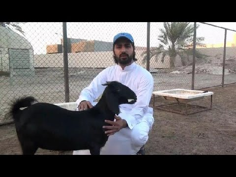 #فيديو : #شاهد قبل أن تضحي؟؟؟  .. ضروري شوف هذا المقطع