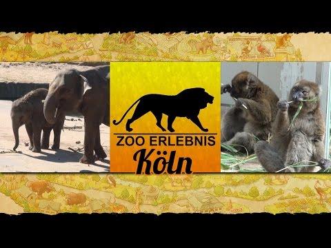 Köln: Zoo Köln - Zoo Erlebnis #5 - fünfte Ausgabe von Z ...