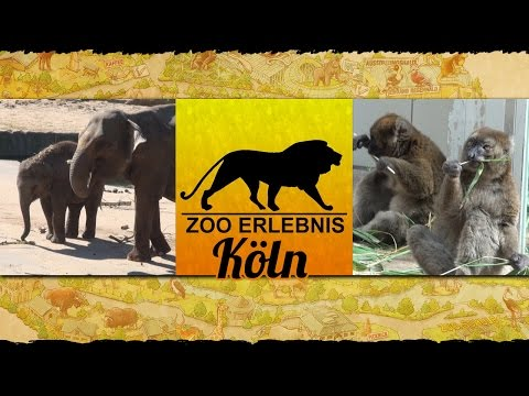 Köln: Zoo Köln - Zoo Erlebnis #5 - fünfte Ausgabe v ...