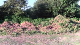 Pulborough United Kingdom  city photos : Adder Alley - Pulborough Brooks West Sussex - Cutting down of ferns August 2nd 2015