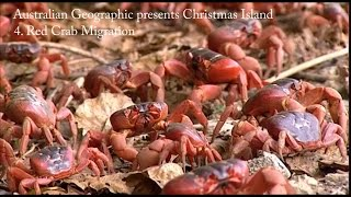 Australian Geographic presents the very Best of Australia: Christmas Island. Part 4 illustrates the enormity of Christmas Island's Red Crab Migration – described ...