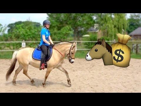 Kijken voor een tweede paard! | Vlog #54 (видео)