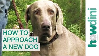 How To Approach And Greet A New Dog