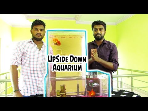 Upside Down Aquarium Setup_Akvárium