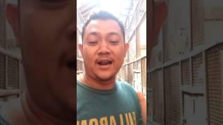 Nonton Taukah Anda    Penangkaran Burung Terbesar Ada Dimana     Ya Di Graha Mbrk Film Subtitle Indonesia Streaming Movie Download