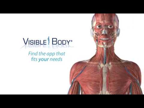 Search Results For Best Free Human Anatomy In 3d Newest Mp3 Music