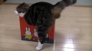 いろいろな小さ過ぎる箱とねこ。-Many too small boxes and Maru.-