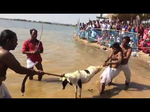 Video Beerapa festival devunipally(13) download in MP3, 3GP, MP4, WEBM, AVI, FLV January 2017