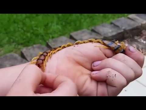 العرب اليوم - تعرف على الحشرة التي تتمنى وجودها في منزلك