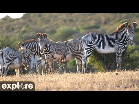 Live-Cam: Wildtiere in Afrika - Wildlife Safari Camer ...