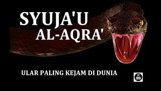 Video Inilah SYUJA'UL AQRA' Ular Paling Kejam di Dunia MP3, 3GP, MP4, WEBM, AVI, FLV Desember 2018