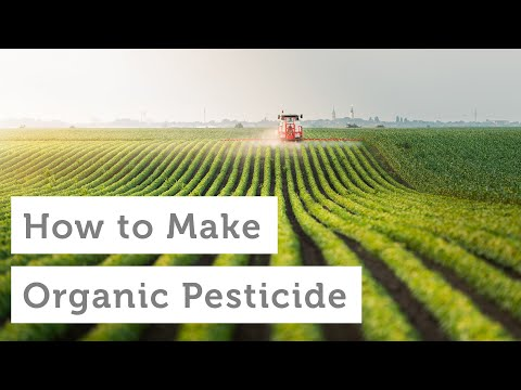 How to Make Your Own Homemade Organic Pesticides