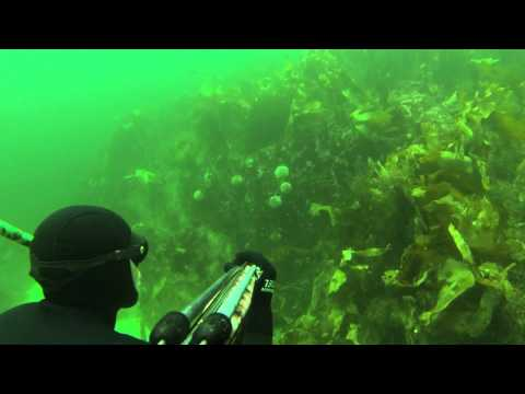 Spearfishing Averøya