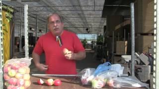 #737 Durchbruch in der Apfelzüchtung - Lagerfähigkeit von Sommeräpfeln