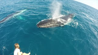 Hervey Bay Australia  city images : Humpback Whale Watching In Hervey Bay Australia