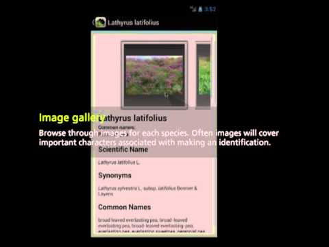Video of Environmental Weeds Australia