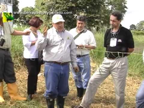 Tierra Pastos y Ganado  - Seminario de Campo en Armenia2 Dic17 2011