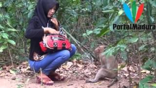 Video Keunikan Hutan Kera Nepa, Banyuwates, Sampang #portalmadura com MP3, 3GP, MP4, WEBM, AVI, FLV Juli 2018