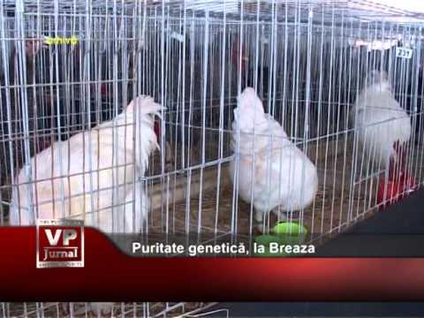 Puritate genetică, la Breaza