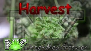Harvest: Moster Cookie BX, day 63 by  NVClosetMedGrower
