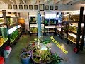 Tour An Award Winning Fish Room  Stick Around Long Enough To See The Soda Cichlids
