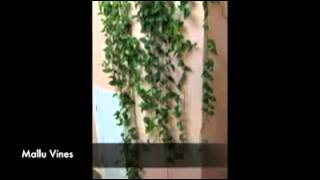 Money Plant Mallu Vines Official Youtube Channel All Rights Reserved http://www.malluvines.com...