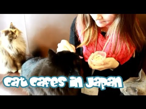japan - Cat Cafes are probably one of the coolest things about living in Japan! Information about the stores is written below. Subscribe to my channel for more video...