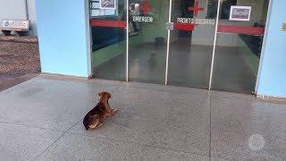 Iacanga: cão fica na porta de hospital à espera do dono