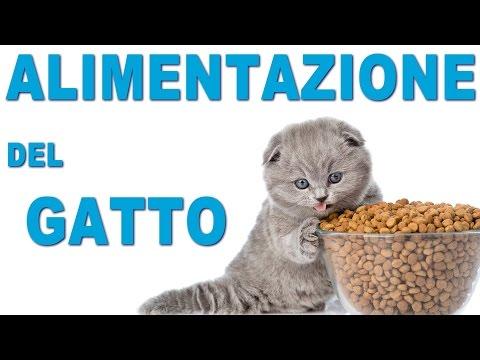 Alimentazione del Gatto - Cibi OK e Consigli Utili