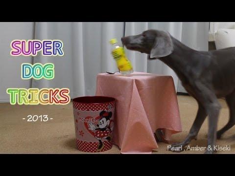 SUPER DOG TRICKS 2013 -バカッコイイ犬-