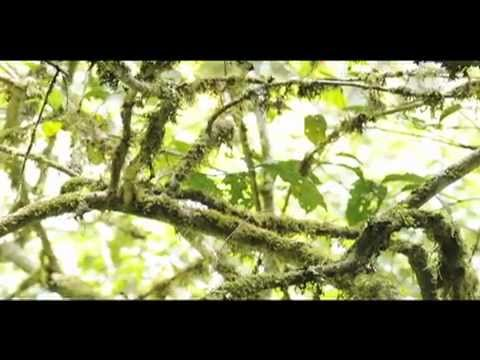  - Neotropical Primate Conservation  |  NPC